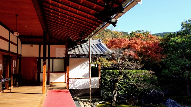 京都圓徳院の庭園