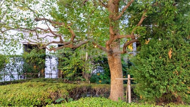 神戸ベイシェラトンホテルの周辺の木々